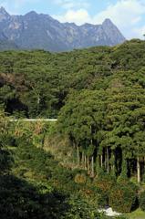 タンカン畑と本富岳