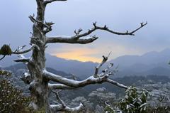 冬の屋久島