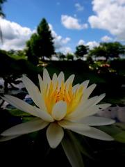 Light in the hiraike pond