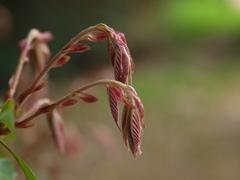春を散策4