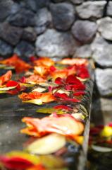 Baliの落ち葉