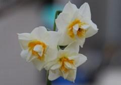 2010.01.20  庭の花たち 008