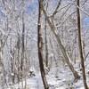冬の散策路