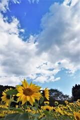 秋空と夏色