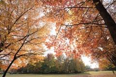 秋色の散歩路