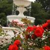 噴水とバラ