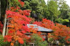 『神護寺の紅葉 参』
