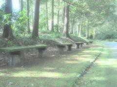 『万博記念公園 日本庭園にて』