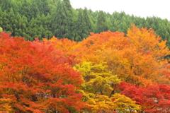 『高雄の秋 弐』