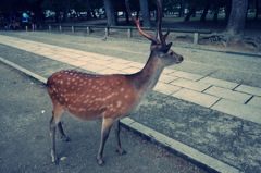 『鹿さま』