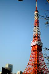 東京タワワ