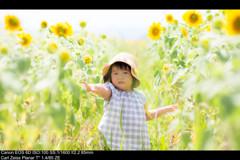 夏+向日葵