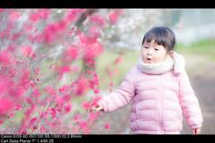 ちょっぴり春色3