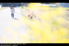 ayano的な春の色2