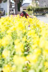 菜の花撮影会2