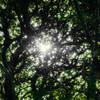 森の中の Korin