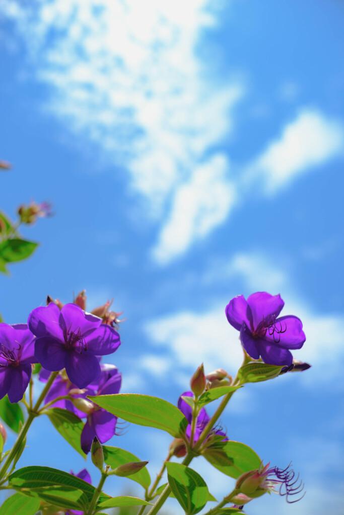 庭の花の夏