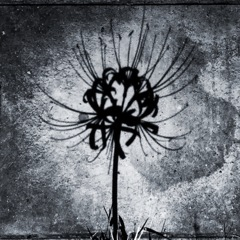 黒い彼岸花