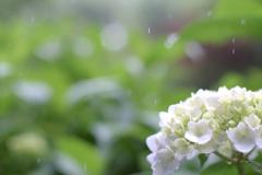やさしい雨(5)