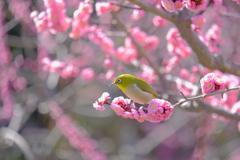 気が付けば春