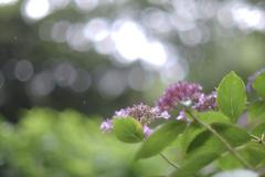 やさしい雨(6)