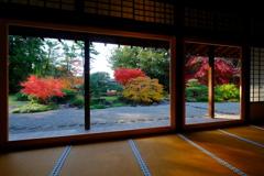 奈良へ紅葉狩りに行きたい