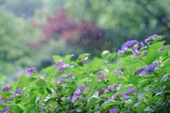 やさしい雨(2)