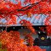 2018古都の秋(奈良)