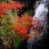 大滝と紅葉