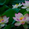 貴い花(2)