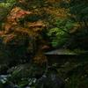 秋の山中で