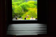 畳からの景色