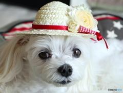 昼下がりの麦わら帽子