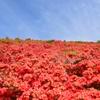 葛城山の春