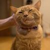 【お試し写真】ネコ