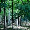 公園で森林浴