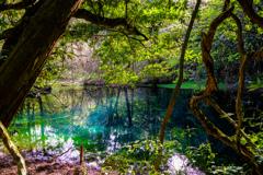 春の丸池様  その4