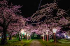 夜の荘内神社  その2