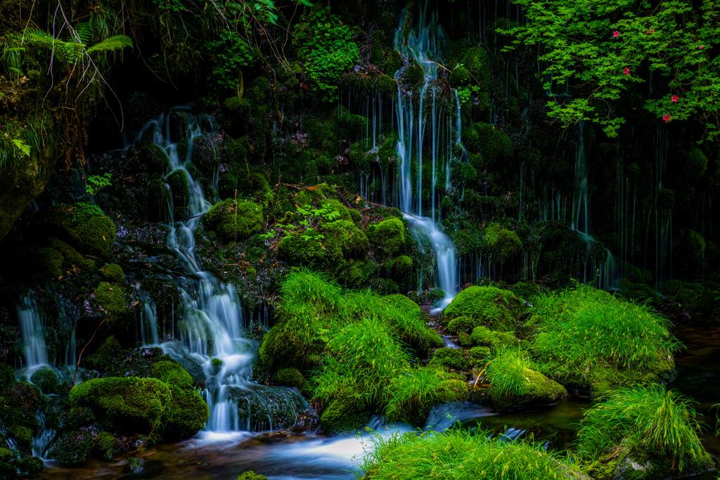 新緑と伏流水