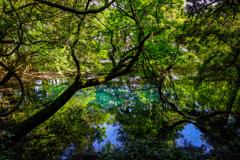 新緑と翠  丸池様  その8