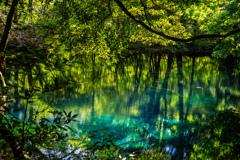 新緑と翠  丸池様  その1