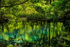 新緑と翠  丸池様  その5