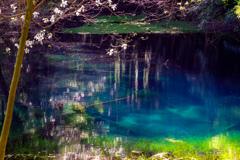 春の丸池様  その1