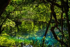 新緑と翠  丸池様  その6