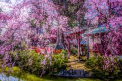 日本の春 アドバンスドHDR
