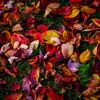 カラフルな秋