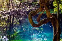 春の丸池様  その3