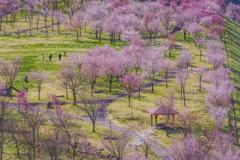 春景  ④