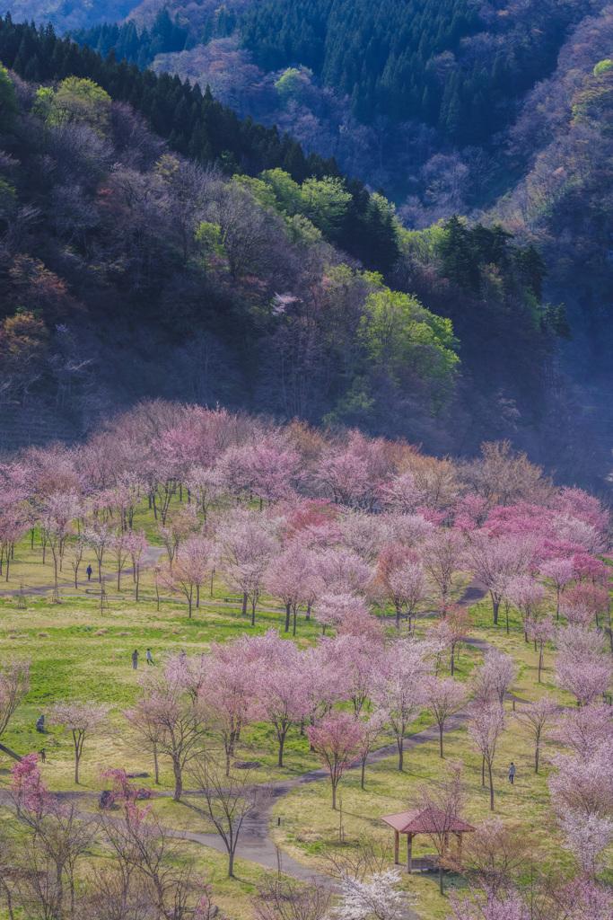 春景  ③