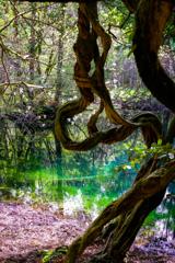 春の丸池様  その5